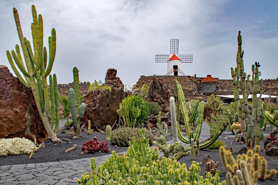 jardin de cactus cactus lanzarote spain - Jardn De Cactus