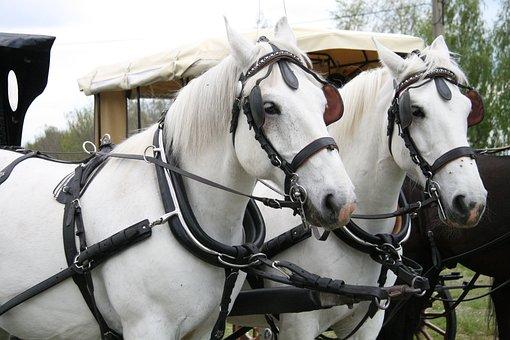 Horses, Horse, Truck, Mare, Stallion