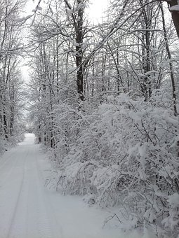 Road Less Traveled, Winter Scene, Snow