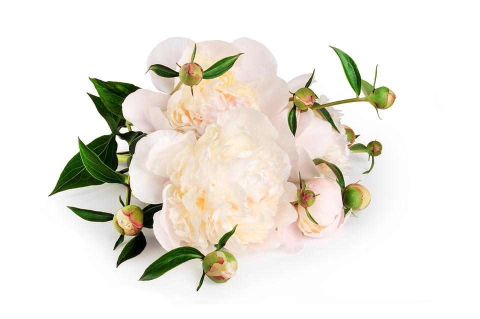 Peony Flower Bouquet · Free photo on Pixabay
