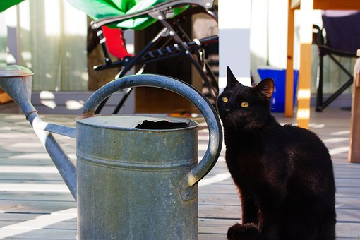 Cat, Kitten, Black, Watering Can, Cute