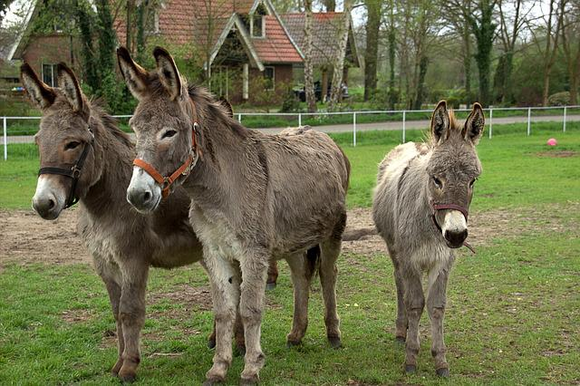 Donkeys Ass Animal The...