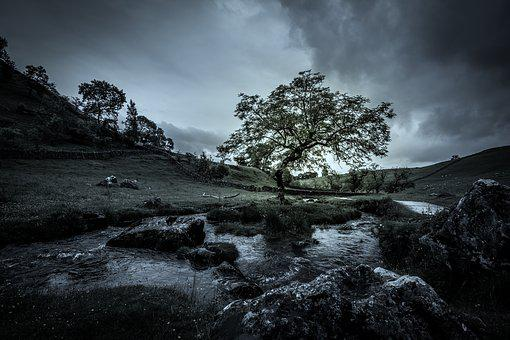 Tree, Stream, Mood, Moody, Nature, Water