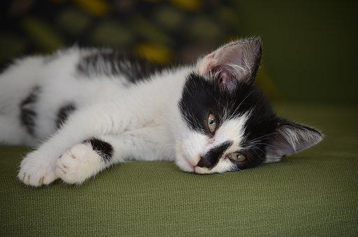 Cat, Baby Cat, Cat Baby, Nature, Animal