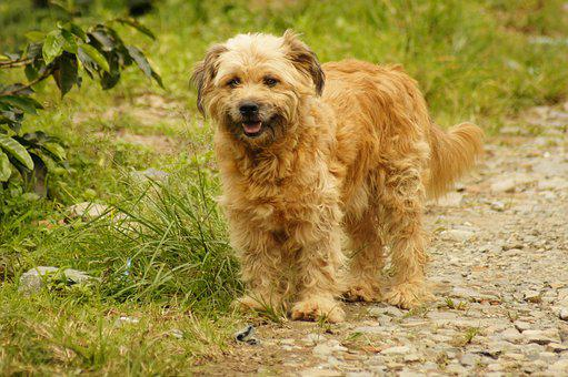 My, Dogs, The, Field, Armenia, Quindio