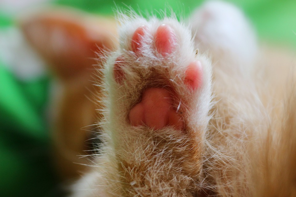 cat leg animal free photo on pixabay