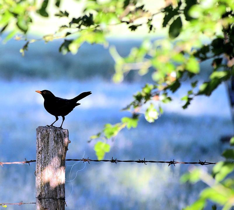 84 Gambar Pemandangan Burung HD Terbaik