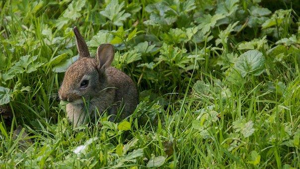 Rabbit, Meadow, Park, Casting, City