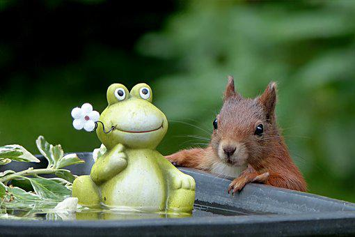 Animal, Rodent, Squirrel