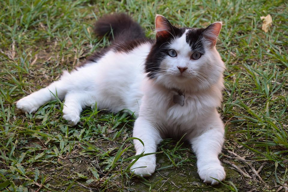 gato animales domesticos foto gratis en pixabay