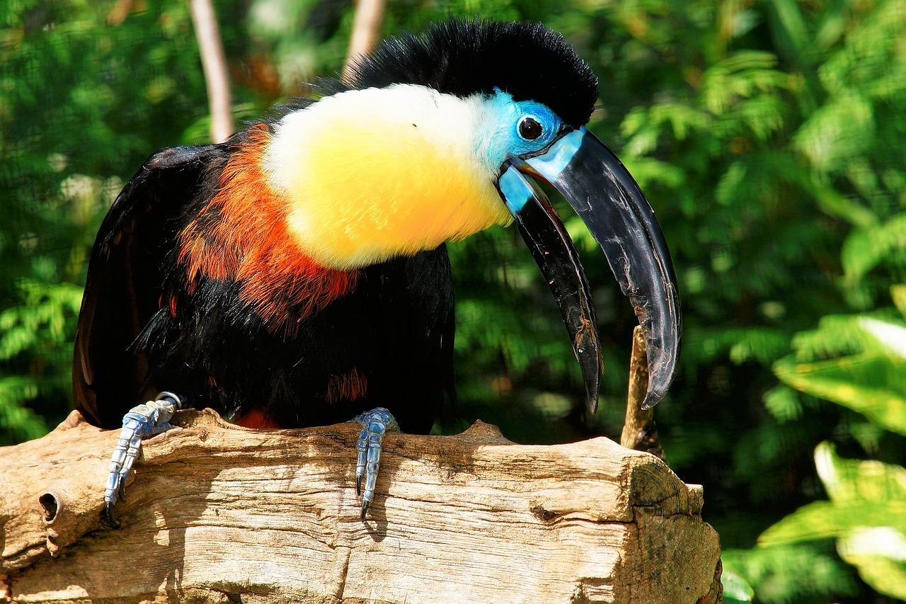 тропические птицы картинки можете сомневаться качестве