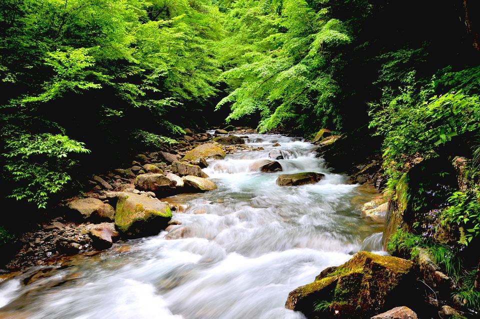中央に川が流れる森林