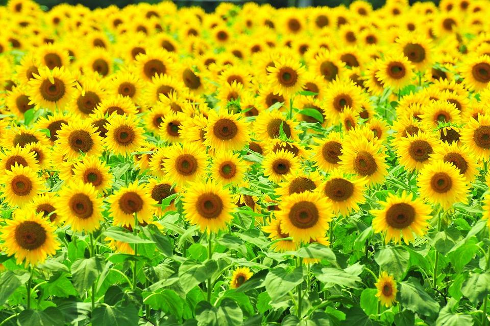 黄色带三级mpinshancom