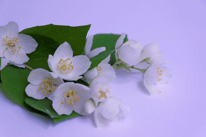 Цветок жасмина открытки, гифы бабье лето