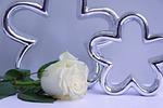 rose, white, deco