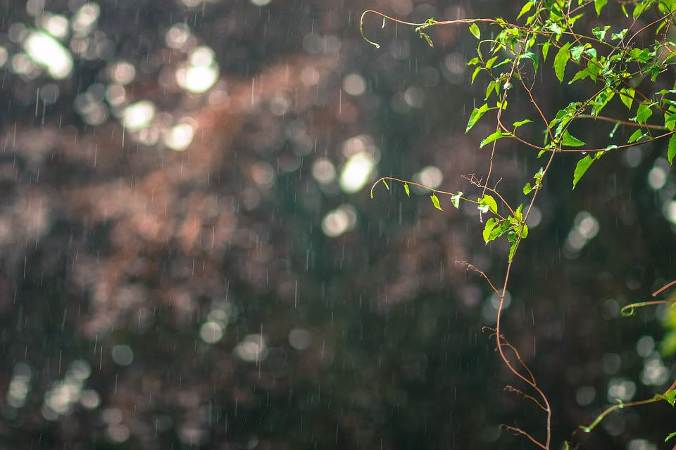 Raining Photo Blur Free Photo On Pixabay