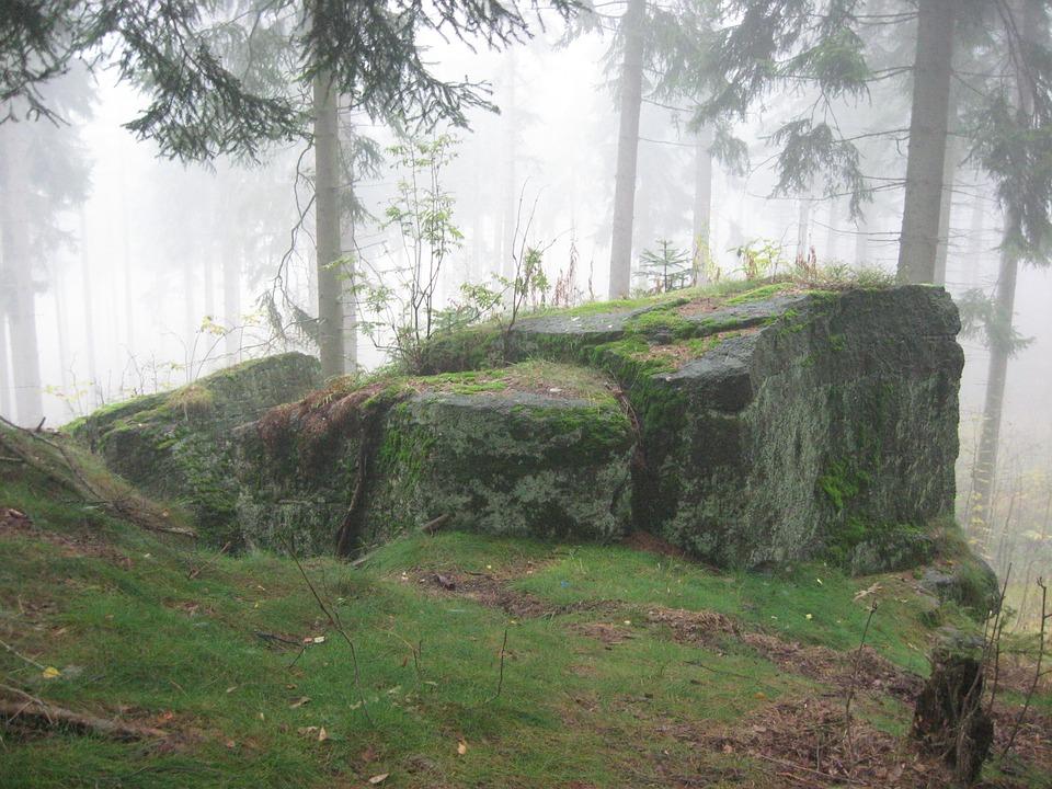 Forest Rock Tree 183 Free Image On Pixabay