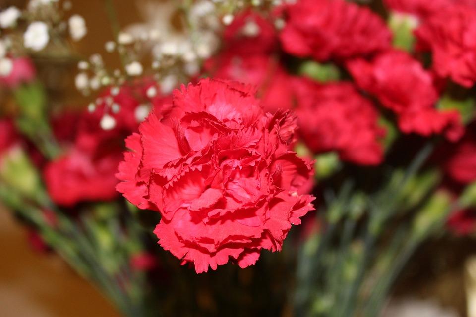 Fabelhaft Nelke Blume Nelken Rote - Kostenloses Foto auf Pixabay #XC_92