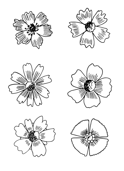 Flower blossom bloom free image on pixabay flower blossom bloom drawing black and white mightylinksfo