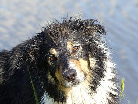 Dog, Dogs, Pet, Sweet, Animal, Portrait