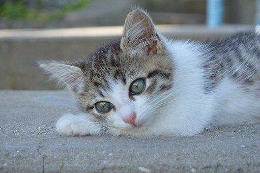 nadržaná horúca mačička