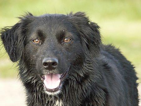 Dog, Dogs, Crossing, Black, Animal