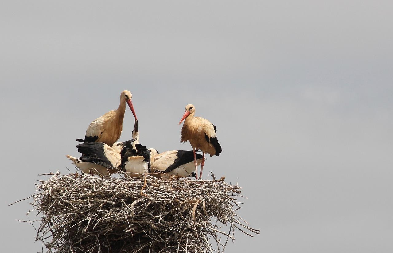 объединяет красивые фото семьи из трех аистов используют при избытке