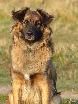 Animal, Dog, Bitch, Brown, Nice, Dogs
