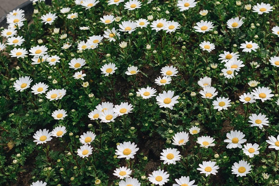 Bunga Musim Semi Merah Muda Foto Gratis Di Pixabay