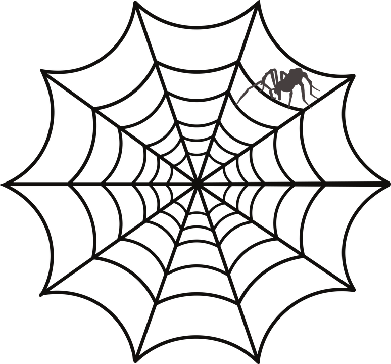 Spider Animals Nature Free vector graphic on Pixabay
