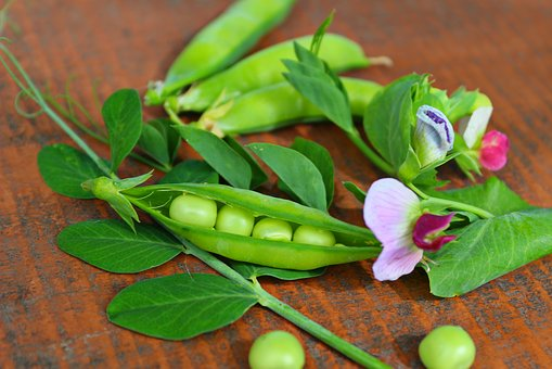Peas, Pods, Green, Flowers, Vegetables
