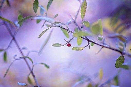 Fruit, Tree, Garden, Berry, Nature