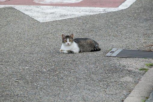 Cat, Street, Pet, Cute, Feline, Fur