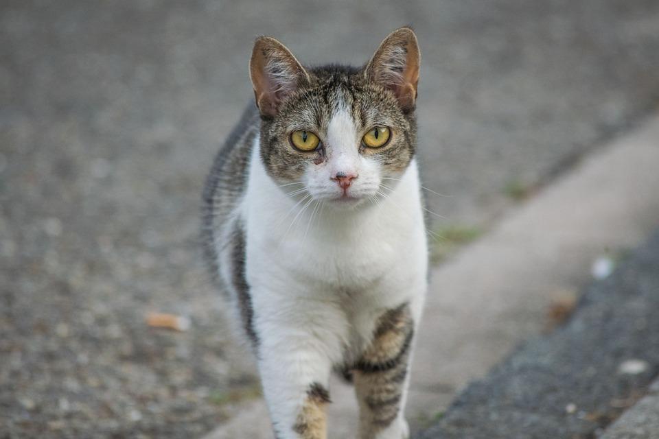 Unduh 99+ Gambar Kucing Jalan Keren Gratis