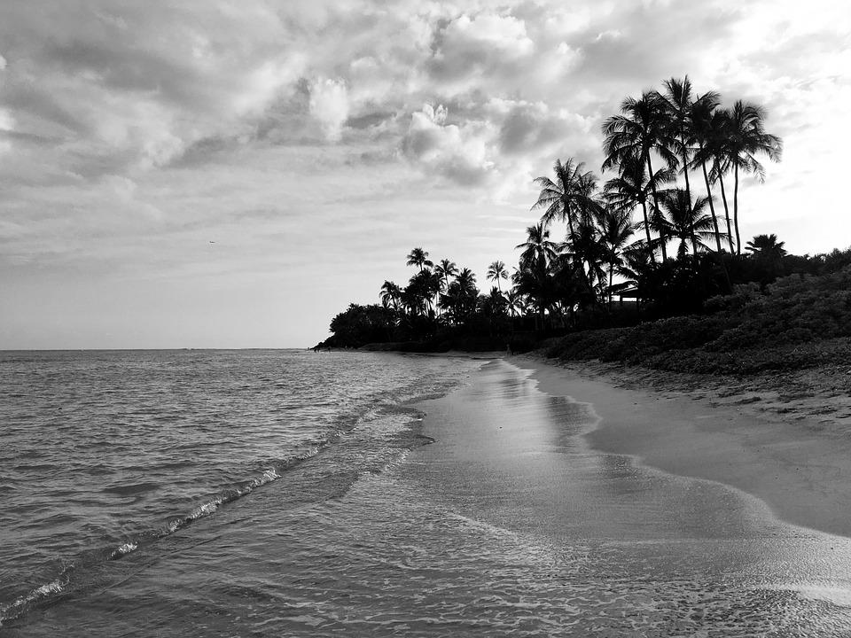 Beach palm trees hawaii sand water black and white