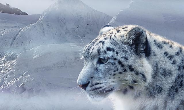 L opard des neiges la photo gratuite sur pixabay - Chat type leopard ...