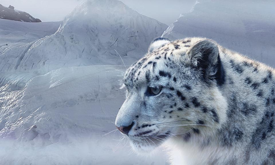 sneleopard levested