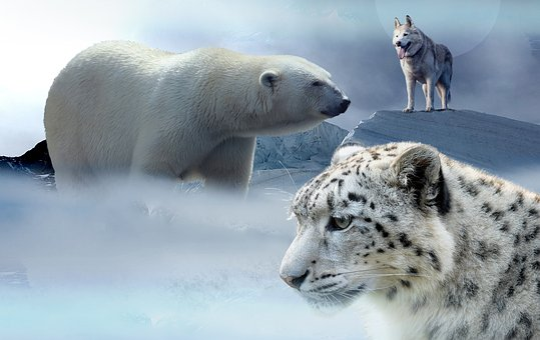 Jegesmedve, Husky, Leopard, Jég, Hegyek - krónika