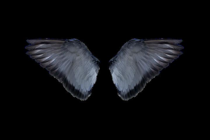 крылья голубя картинка затеяла новую