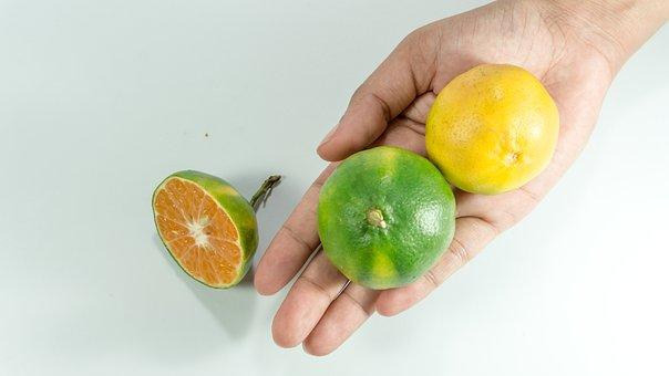 亚洲, 绿色橘子, 手, 妇女, 维生素 C, 橙色, 桔子, 孤立, 水果