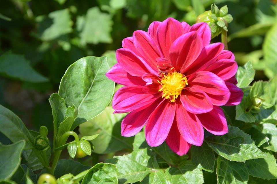 Fleurs roses fushia - Initiatives fleurs et nature ...