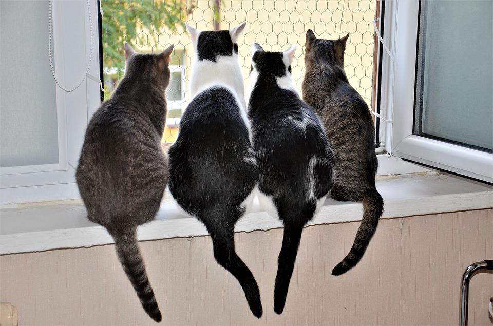 動物, 猫, 通常の猫, シルエット, 友人