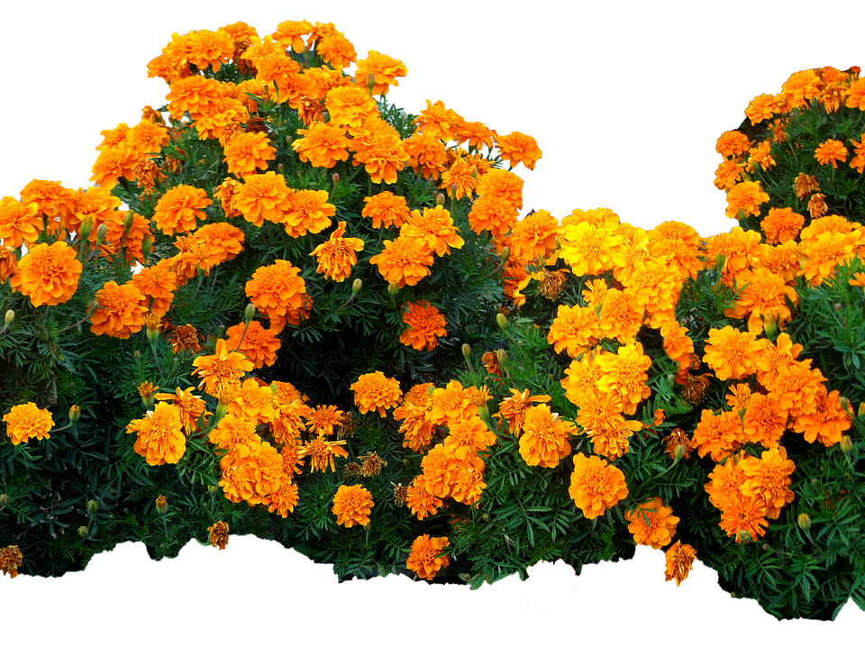 Flowers Yellow Bright Free Photo On Pixabay