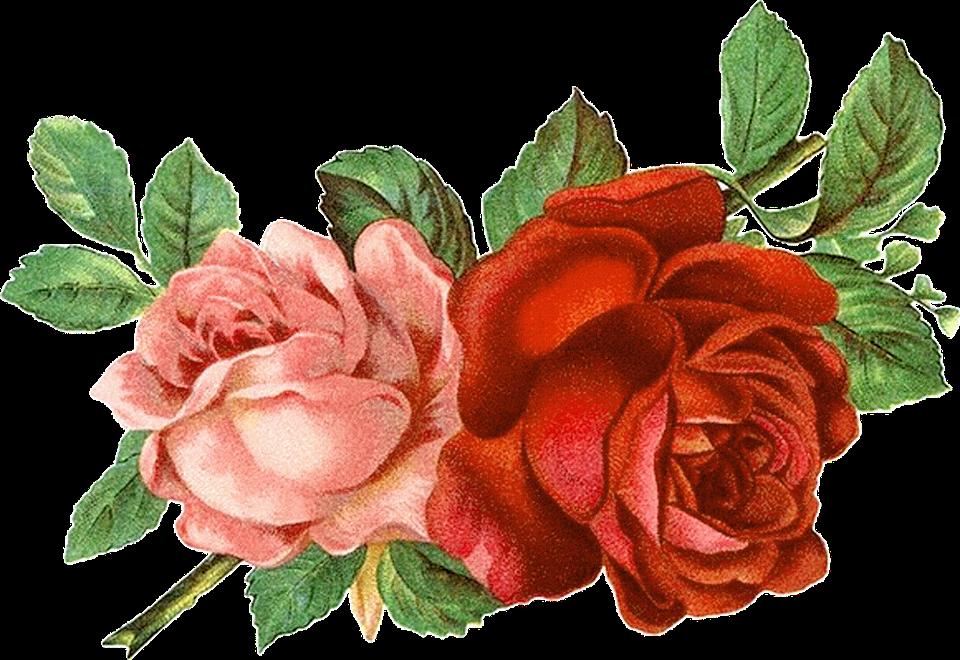 Розы фото картины