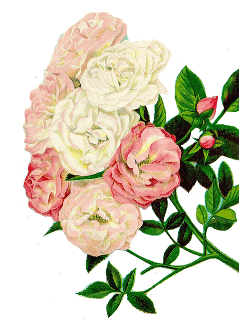 roser clipart blomster  u00b7 gratis foto p u00e5 pixabay