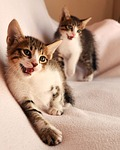cats, glad, two