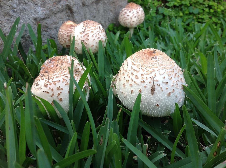 Top Pilz Pilze Garten-Pilze - Kostenloses Foto auf Pixabay EV68