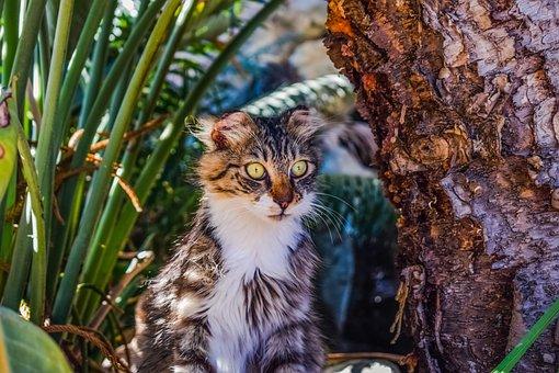 Cat, Stray, Eyes, Animal, Cute, Looking