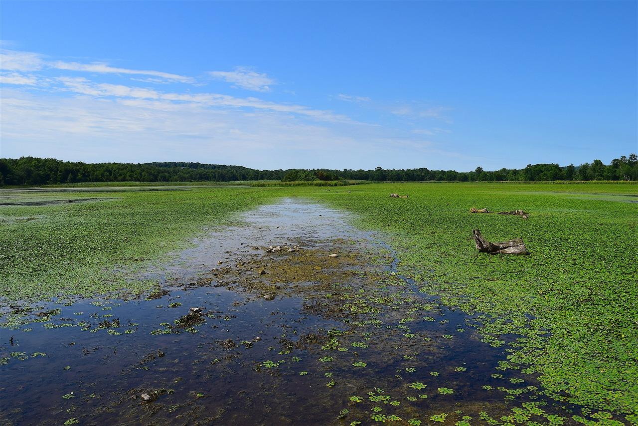 осенью картинки водно-болотных угодий чем носить