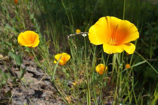 flor amarilla campo amarillas